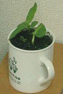 mini_sunflower04.jpg