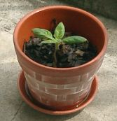 mini_sunflower05.jpg
